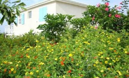 Villa trianon location de charme grand bourg de marie for Jardin tropical guadeloupe