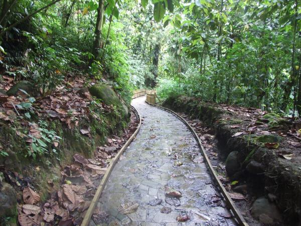 Cascade aux crevisses bain de rivi re basse terre for Au jardin des colibris guadeloupe