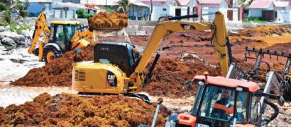 La Guadeloupe chef de file de la coopération anti-sargasse