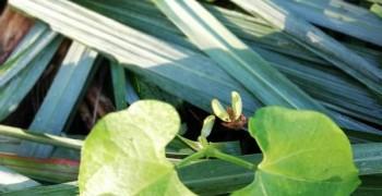 Stage  Défi autonomie alimentaire grâce à la permaculture