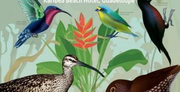 22ème congrès international BirdsCaribbean