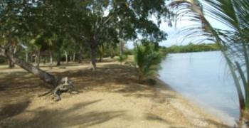 Bain de boue sur la plage de Babin