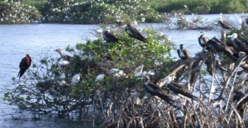 Clarisma Tour : visite de la Mangrove