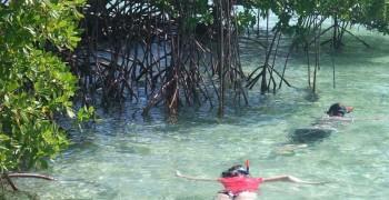 Nico excursions : découvertes pédagogiques