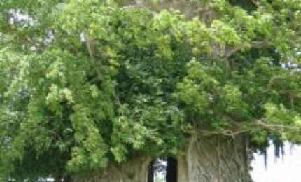 La trace de beautiran: Entre champs de cannes et mangrove