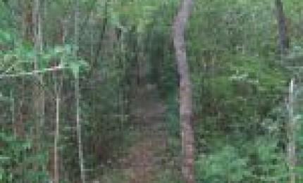 Forêt départementale de Pouzzole