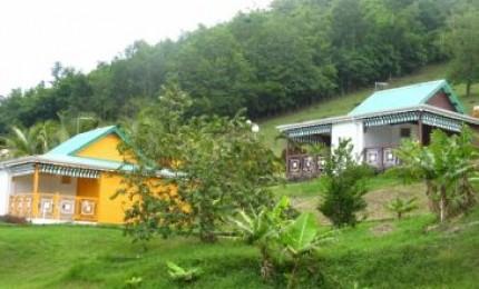 La colline verte