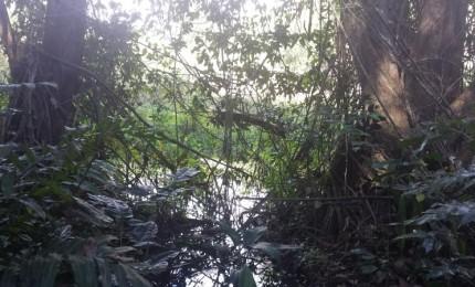 Sur les traces de la ravine Corneille  et de la rivière d'Audouin
