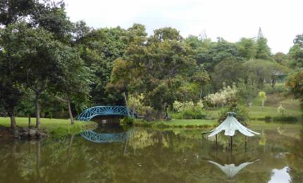 Le jardin d'eau de blonzac - jardin de blonzac
