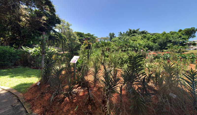 Jardin botanique de basse terre parcs et jardins basse - Jardin botanique guadeloupe basse terre ...